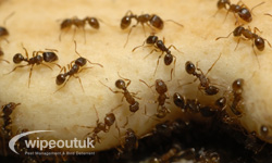 Ant Control in Broughton