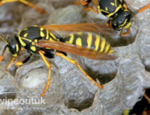 Pest Control in Preston