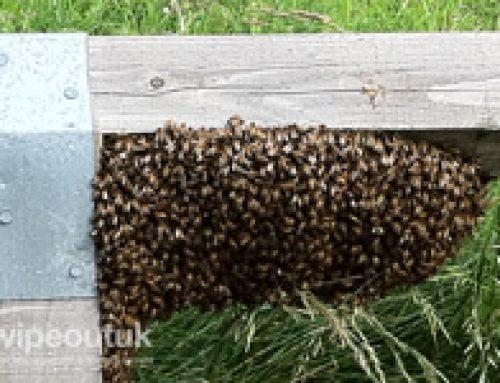 Pest Control in Kirkham