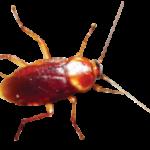 Pest Control in Esprick